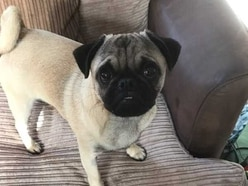 Stolen pug stolen reunited with family after appeal shared 20,000 times