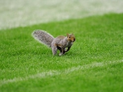 A squirrel made its way on to the field in a college football game and the commentary is perfect
