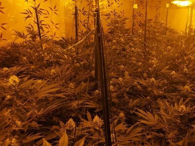 Cannabis factory found by fire crew after they were called to blaze in Wolverhampton