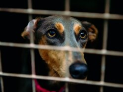 Lucy's Law: Will puppy farm ban ease pressure on rescue centres?