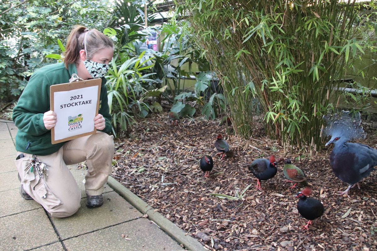 Staff begin counting the birds in the zoo's Lorikeet Lookout
