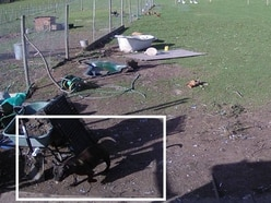 Appeal after chickens, ducks and geese killed in dog attack