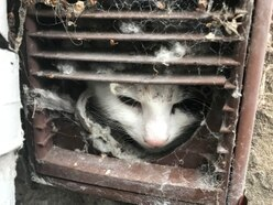 Cat stuck in tumble dryer vent in Kidderminster freed using butter and lolly stick