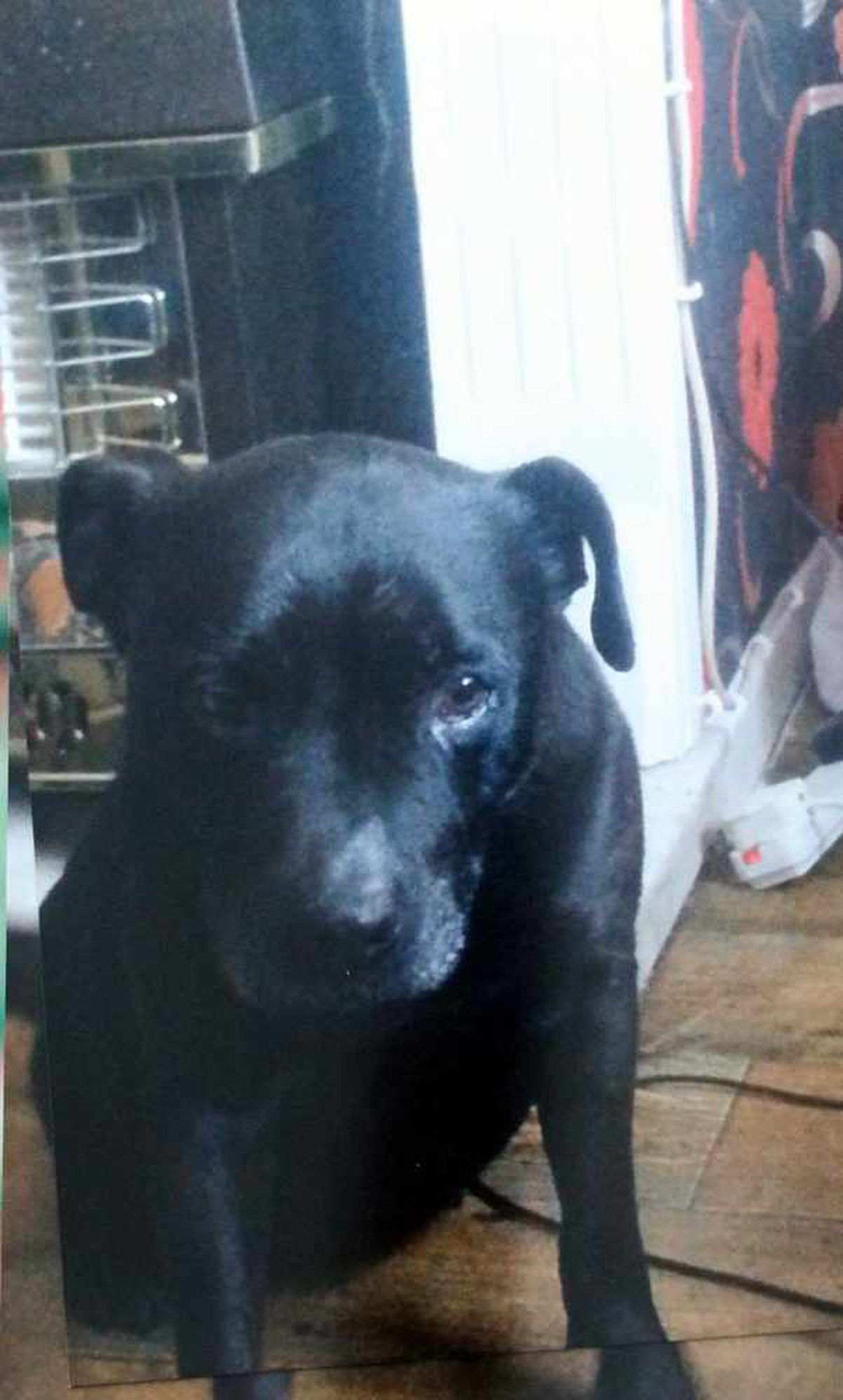 Joanne Wakeley's dog Ebony