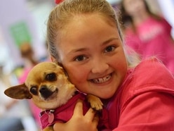 Am dram star is 12-year-old Royal School pupil Freya Poulton of Wolverhampton