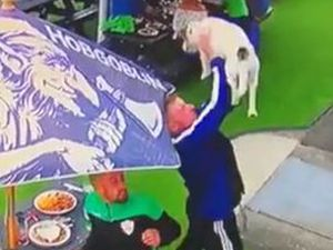 Adam Ravenhall was in position to make the save after the Jack Russell fell out of the window