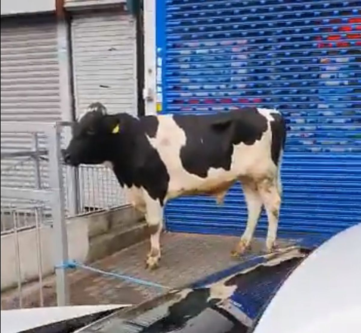 The bull on Stratford Road in Birmingham. Video still from video by @ResponseWMP