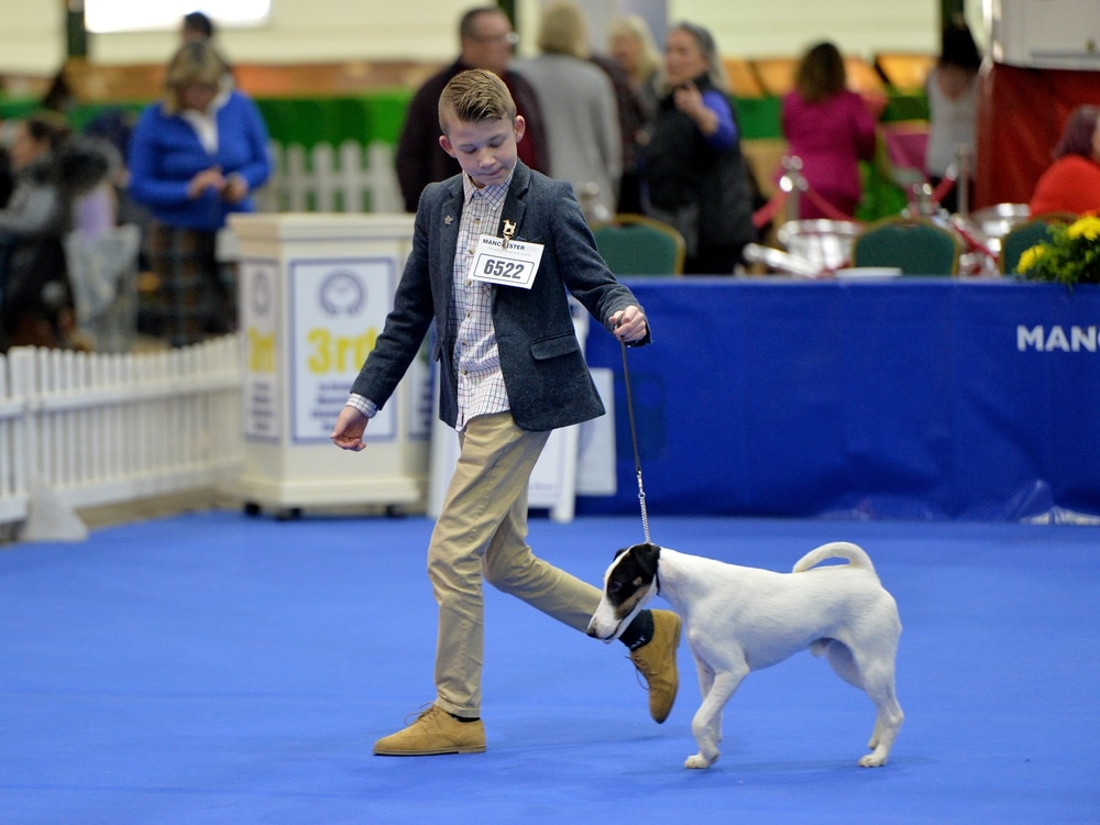 Dogs compete for coveted Crufts place in Staffordshire