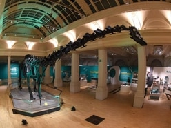 Dippy is a hit in Birmingham as nationwide tour continues