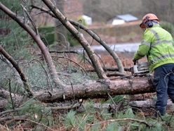 'Good progress' being made on Cannock Chase tree felling